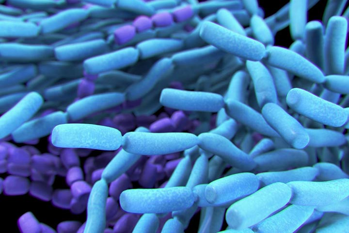lactobacilli probiotics replace antibiotics wound healing